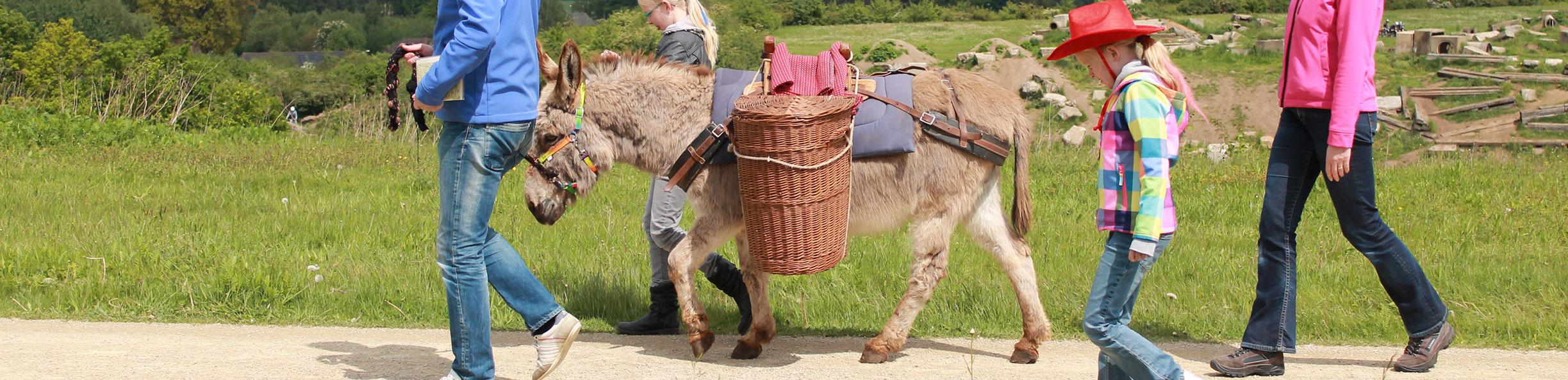 http://www.ezels.nl/uploads/images/header/ezel-wandeltochten.jpg